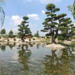 Impianto Irrigazione Bonsai