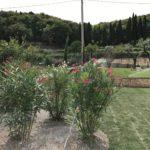 Impianto Irrigazione Prato Realizzazione Giardino
