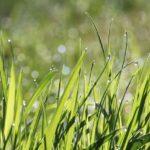 Irrigazione Verona Garden 5