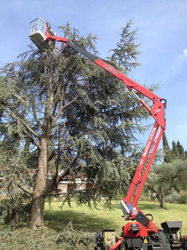 manutenzione giardino manutenzione verde