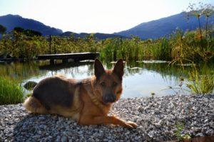 Biolago Lago Di Garda Agriturismo Riva D Garda Dsc 0793 01