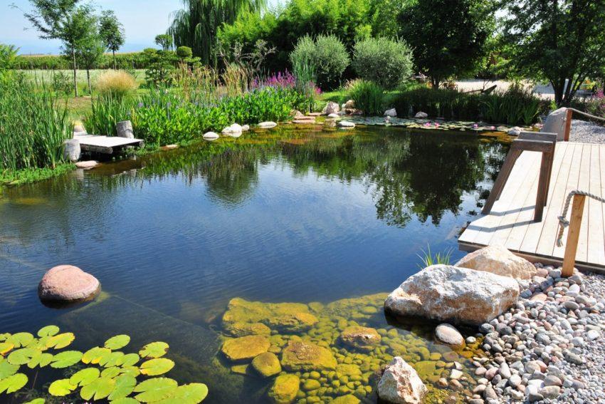 Gallery Biopiscina Agriturismo Verona Lago Di Garda
