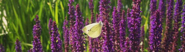Immersi In Una Biopiscina Circondati Dai Colori Della Natura, Si