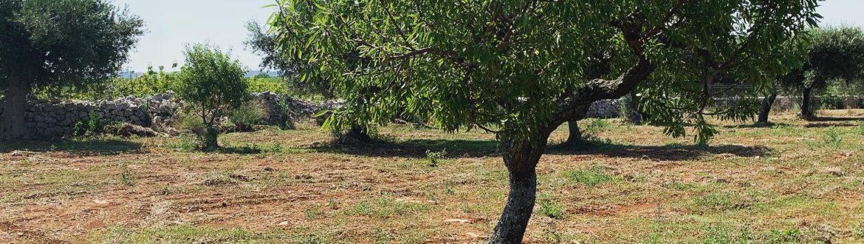 Nuovi Progetti In Arrivo....#puglia #agriturismopuglia #agriturismoitalia #biolake #acqua #relaxtime