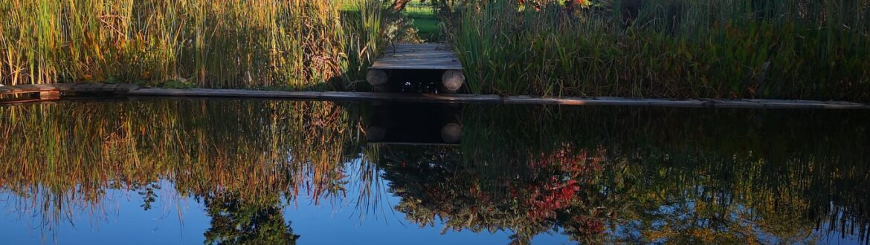 I Colori Dell'autunno #veronapiscinenaturali #biopool #giardini #biolake #biopool #garden #shooting