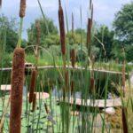 Natural Pool.biolago.verona.veneto.italia