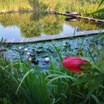 Naturalpool Biolaghi Legno Di Larice Piante Acquatiche Nord Italia