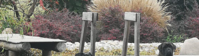 Anche I Cani Di Biopool Garden Design Adorano Rilassarsi Vicino