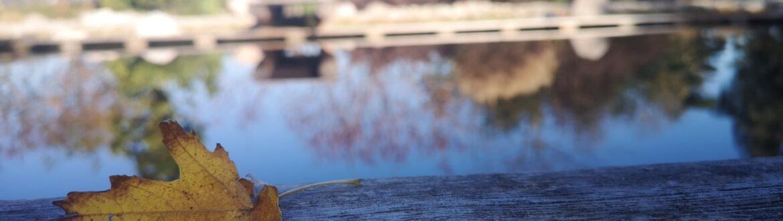 #veronapiscinenaturali #biopool #giardini #biolake #biopool #garden #shooting #photoshooting #bestlife #viverenaturale